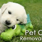 Pet Odor Removal Specialist