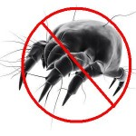We Remove Dust Mites