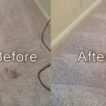 Pet and Odor Stain Removal