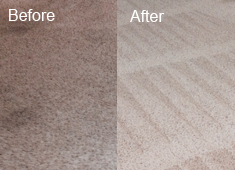 Pet Stains and Pet Odor Removal